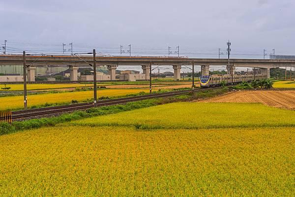 20200609白河阿勃勒與官田火車稻田_7354-1.jpg