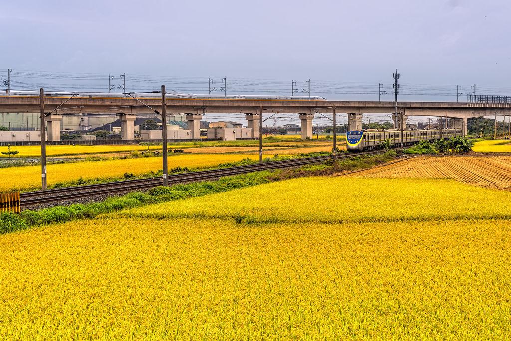 20200609白河阿勃勒與官田火車稻田_7354-2.jpg