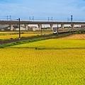 20200609白河阿勃勒與官田火車稻田_7330-1.jpg