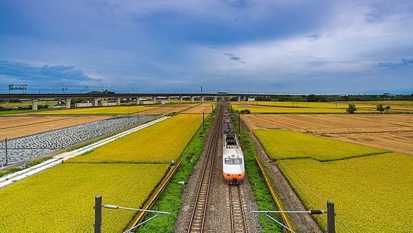 202010110028620200609白河阿勃勒與官田火車稻田_6865-1.jpg