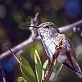 20210102後院蜂鳥_7594-1.jpg