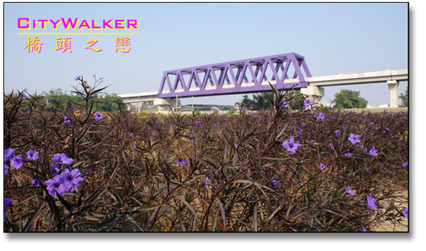 purplebridge1.jpg