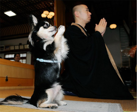 puppy-pray.jpg