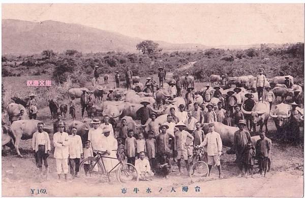 日本時代,台灣人的水牛市場