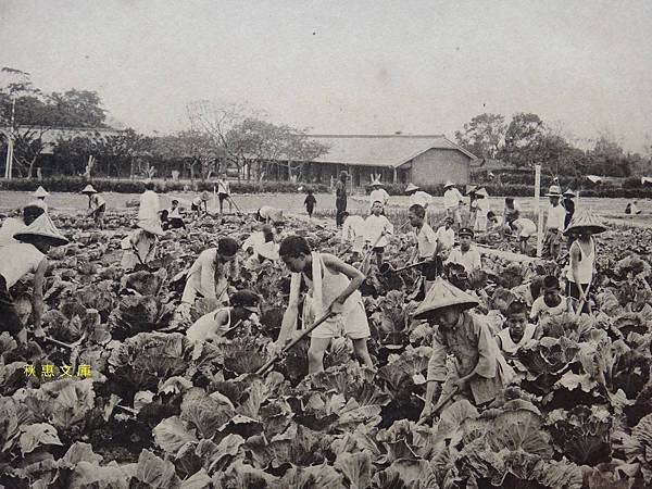 1940年前後關西公學校農業組的學生