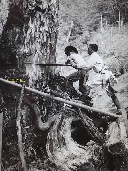 1950年代外國媒体報導台灣的林業2