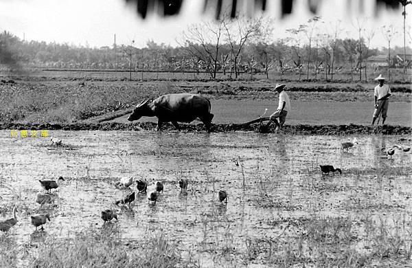 1950年代台灣農村