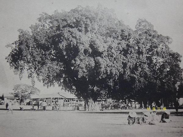 1920年代台南停車場(火車站)前的大榕樹