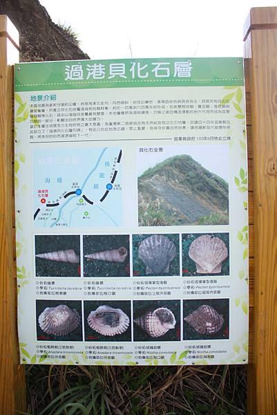 貝化石地層 (1).JPG