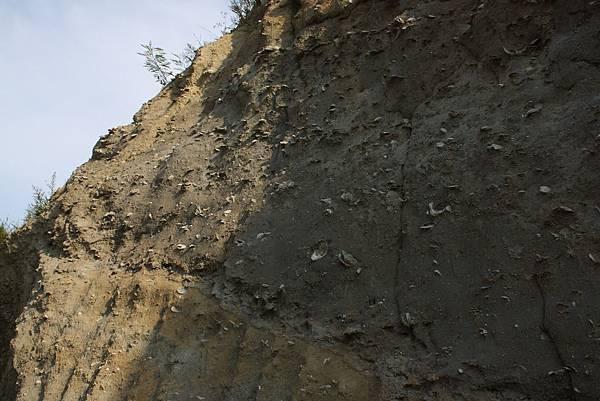 貝化石地層 (3).JPG