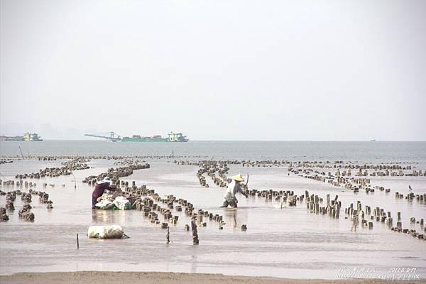 北山海堤 (14).jpg