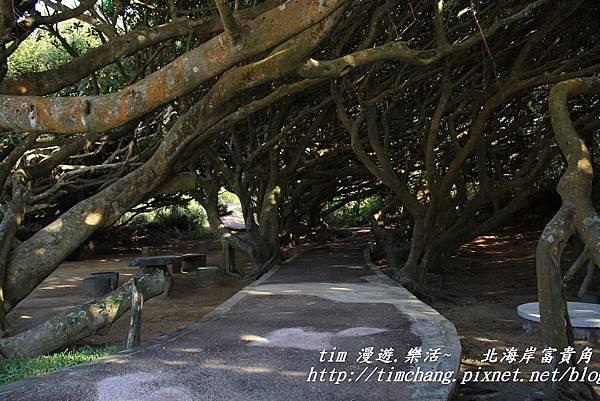 富貴角公園 (11)