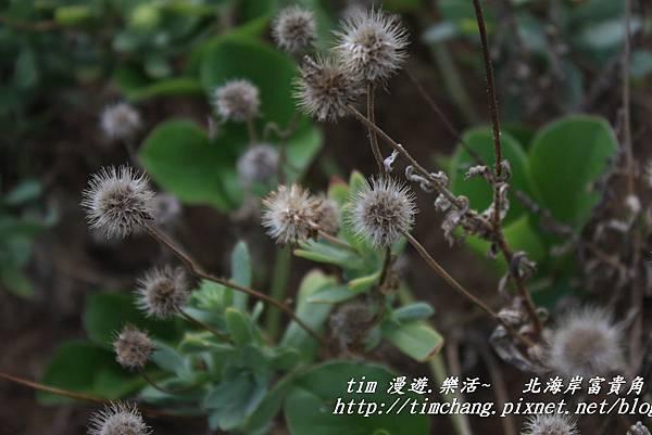 富貴角海岸 (11)
