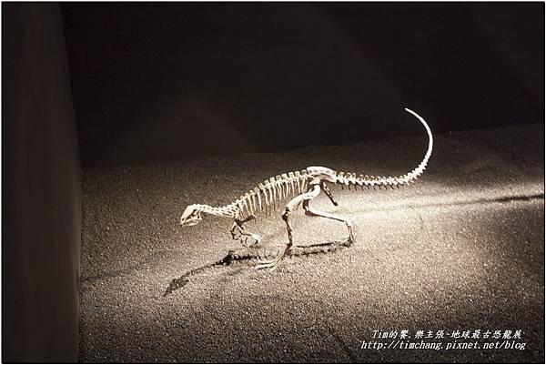 恐龍展 (21)