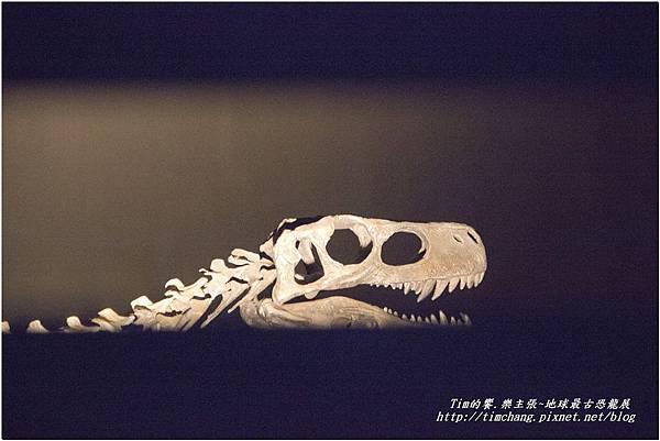 恐龍展 (83)