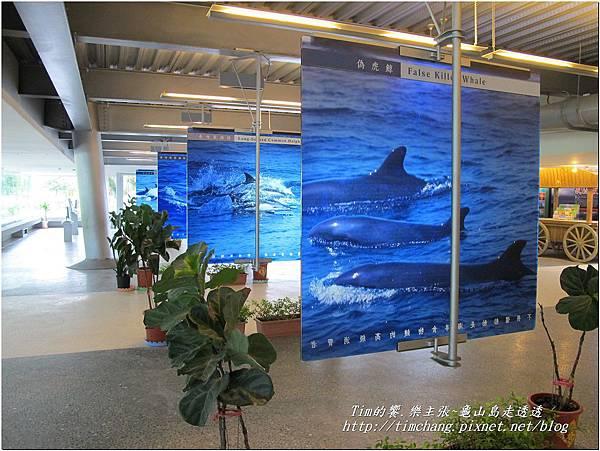 登龜山島 (296)