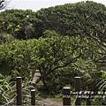 燭臺雙嶼 (62)