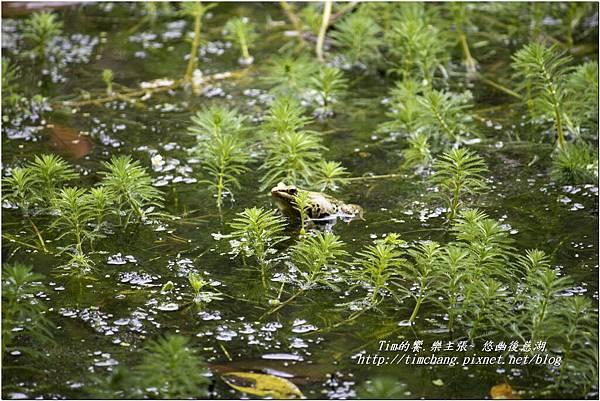 後慈湖生態池 (3)