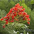 不知名的美麗路樹 (4)