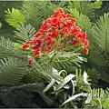 不知名的美麗路樹 (5)