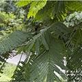 不知名的美麗路樹 (8)