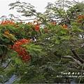 不知名的美麗路樹 (13)