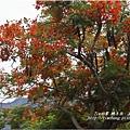不知名的美麗路樹 (19)