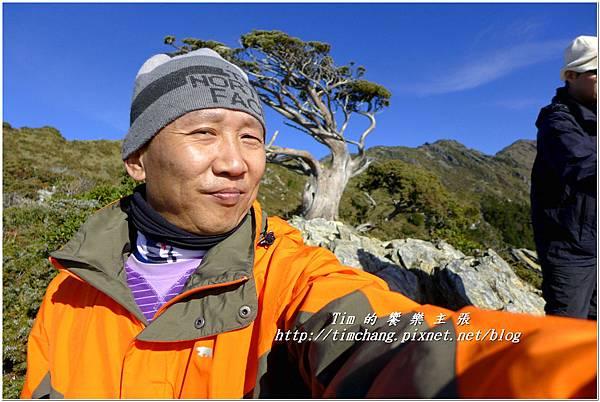向陽樹 (7).jpg
