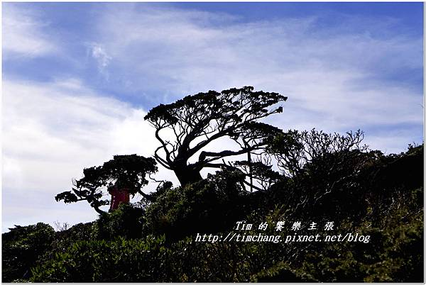 向陽樹 (12).jpg