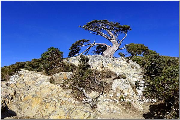 向陽樹 (1).jpg