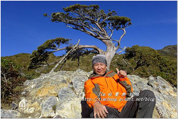向陽樹 (5).jpg