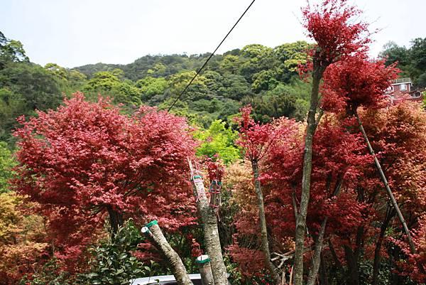 台北奧萬大 (31).JPG