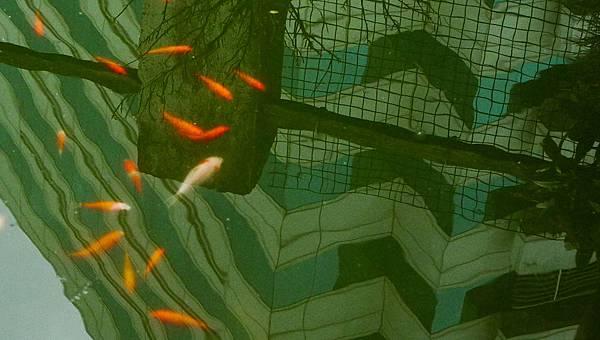 fishswim.jpg