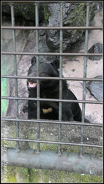 阿蘇動物園