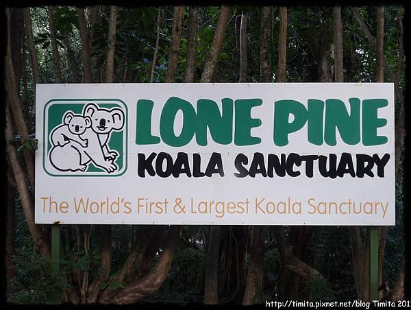 lone pine 1-2.JPG
