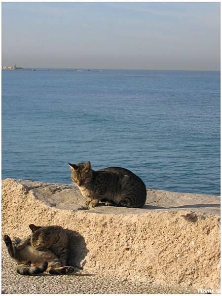 貓在做日光浴