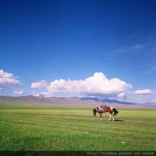 巴音布魯克大草原