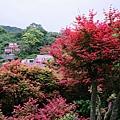 台北奧萬大 紅葉