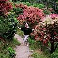山坡上的紅葉