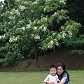 2012 桐花02