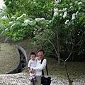 2012 桐花17