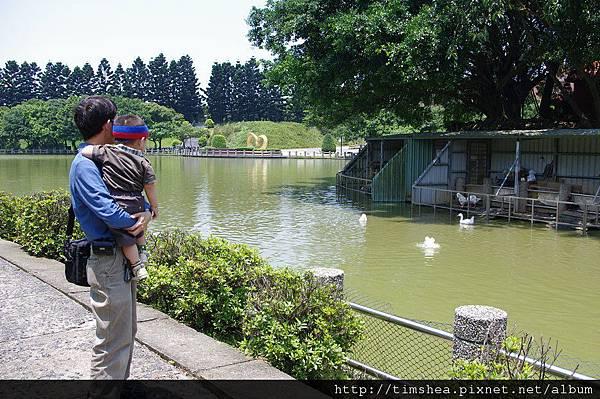 抱兒子看天鵝