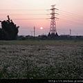 蘆竹  夕陽