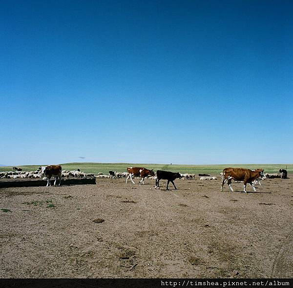 草原上的游牧民族