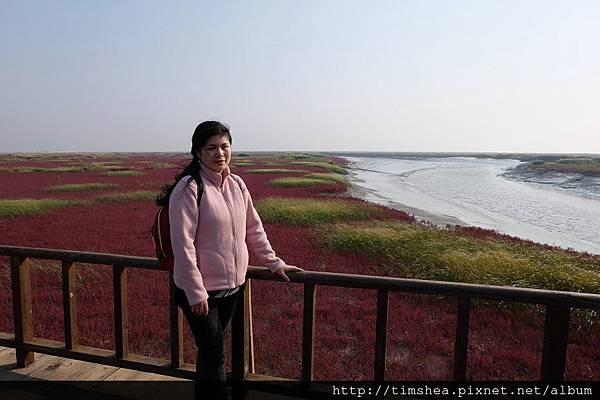 紅海灘  旁邊都是蘆葦