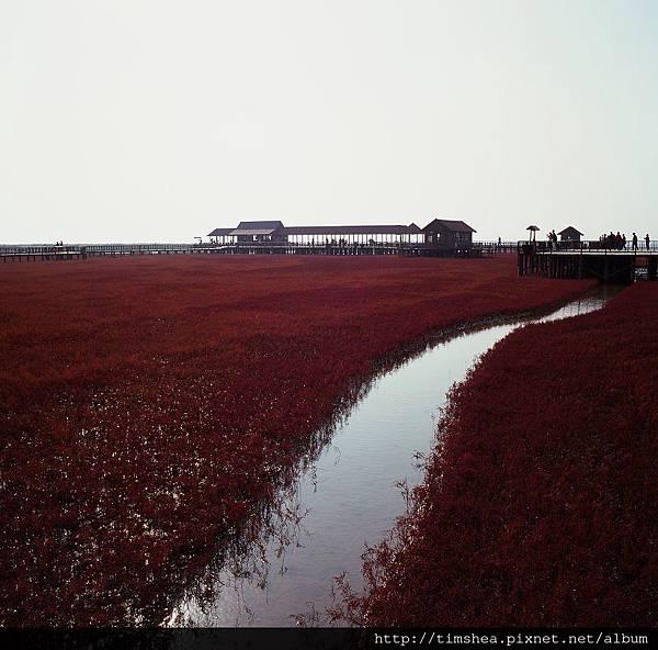 盤錦  紅海灘