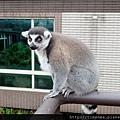 六福莊 外頭動物