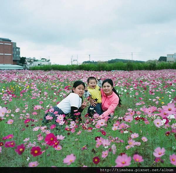 蘆竹花海66-09