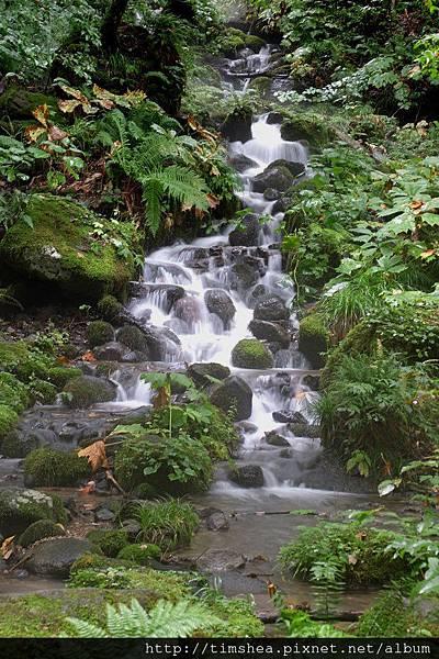 奧入瀨溪 某瀑布
