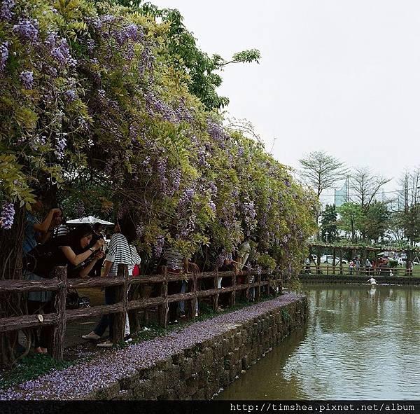 大湖公園 66-02.JPG